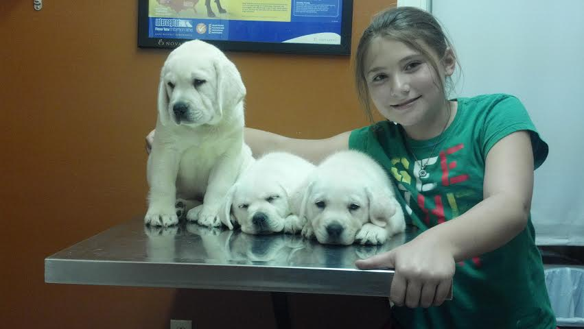Kids And White Lab Puppies