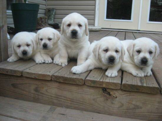 Dogs Puppies In Olx